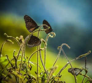 19172834 - butterflies on a field