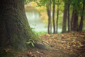 tree-trunk-569275_960_720