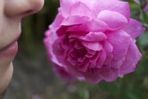 rose-177955_960_720